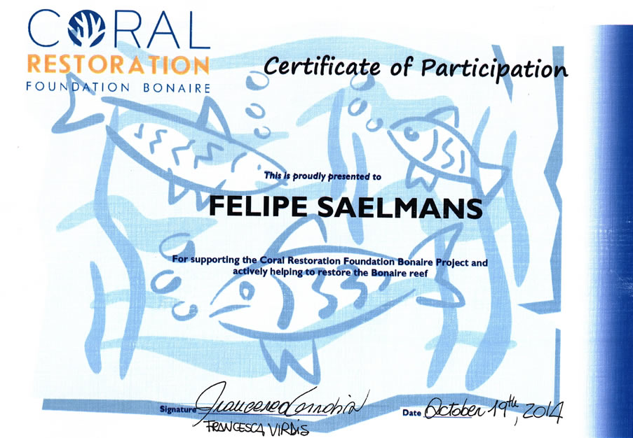 Certificate of Participation Felipe